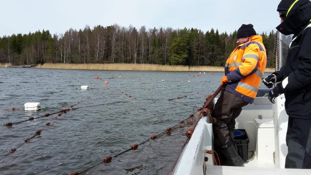 Kalastajien matkassa, kalastaja kokee verkkoja veneestä