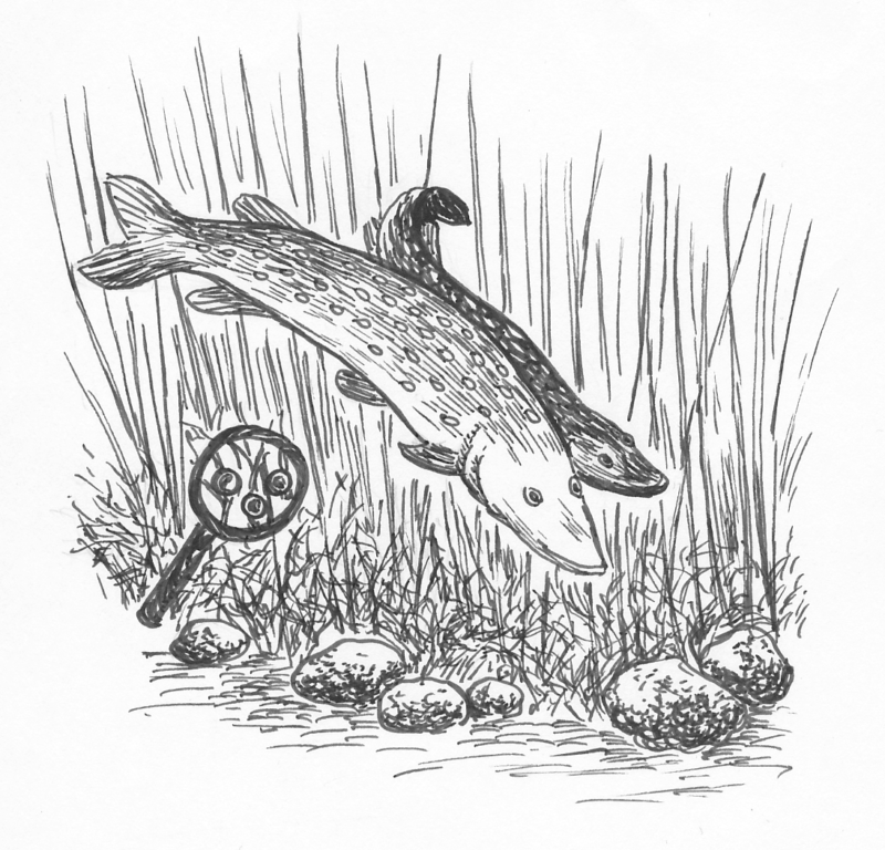Pike spread their eggs loosely among the vegetation