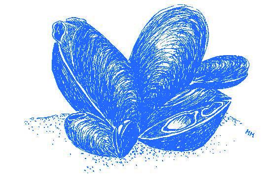 Blåmusslan